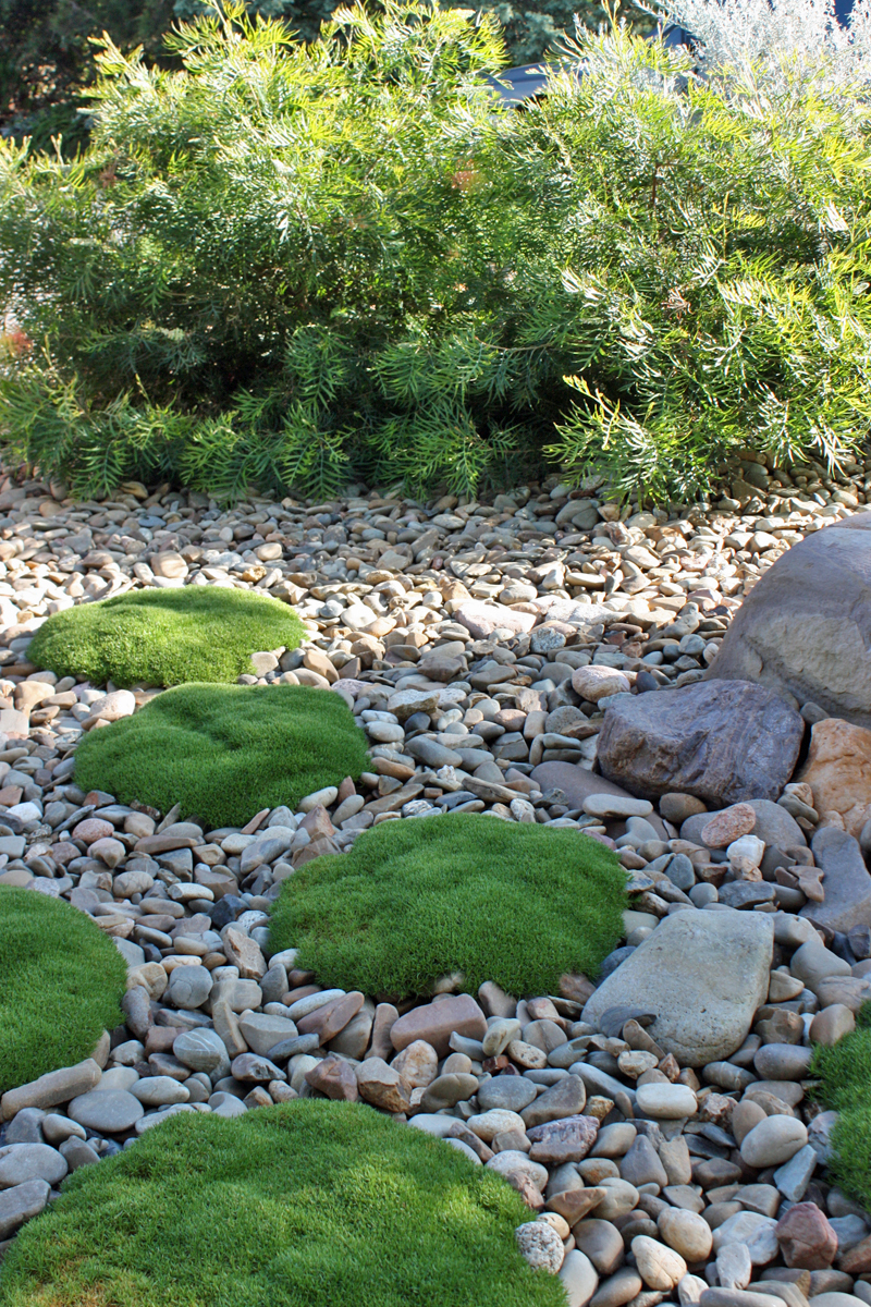 Pambula Beach 3 – POD gardens